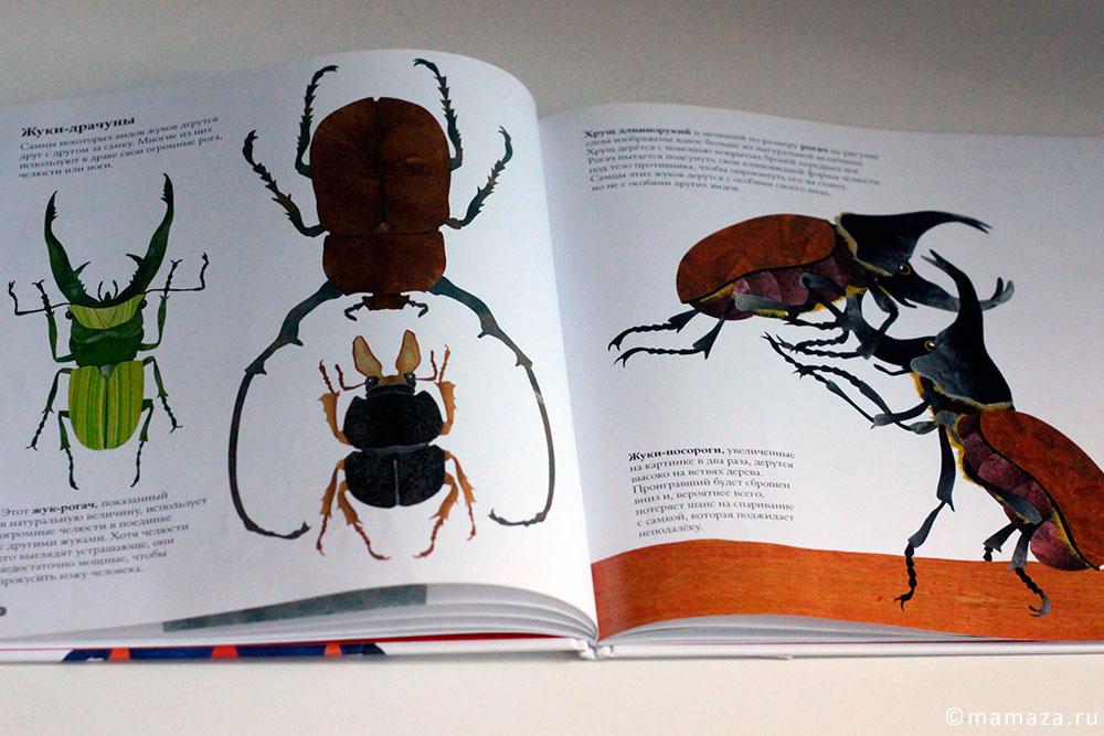 В мире жуков