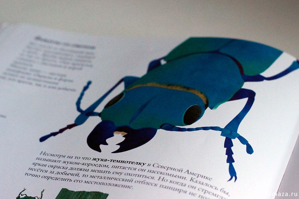 В мире жуков - жук темнотелка